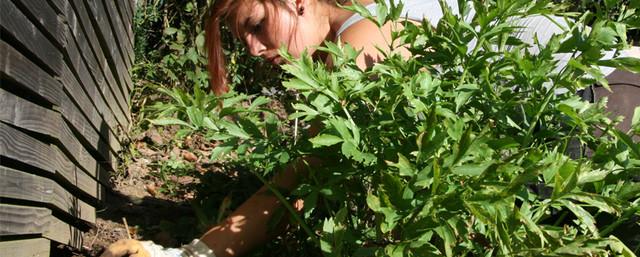 Gartenpflege Nürtingen