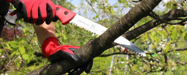 Obstbaumschnitt Nürtingen