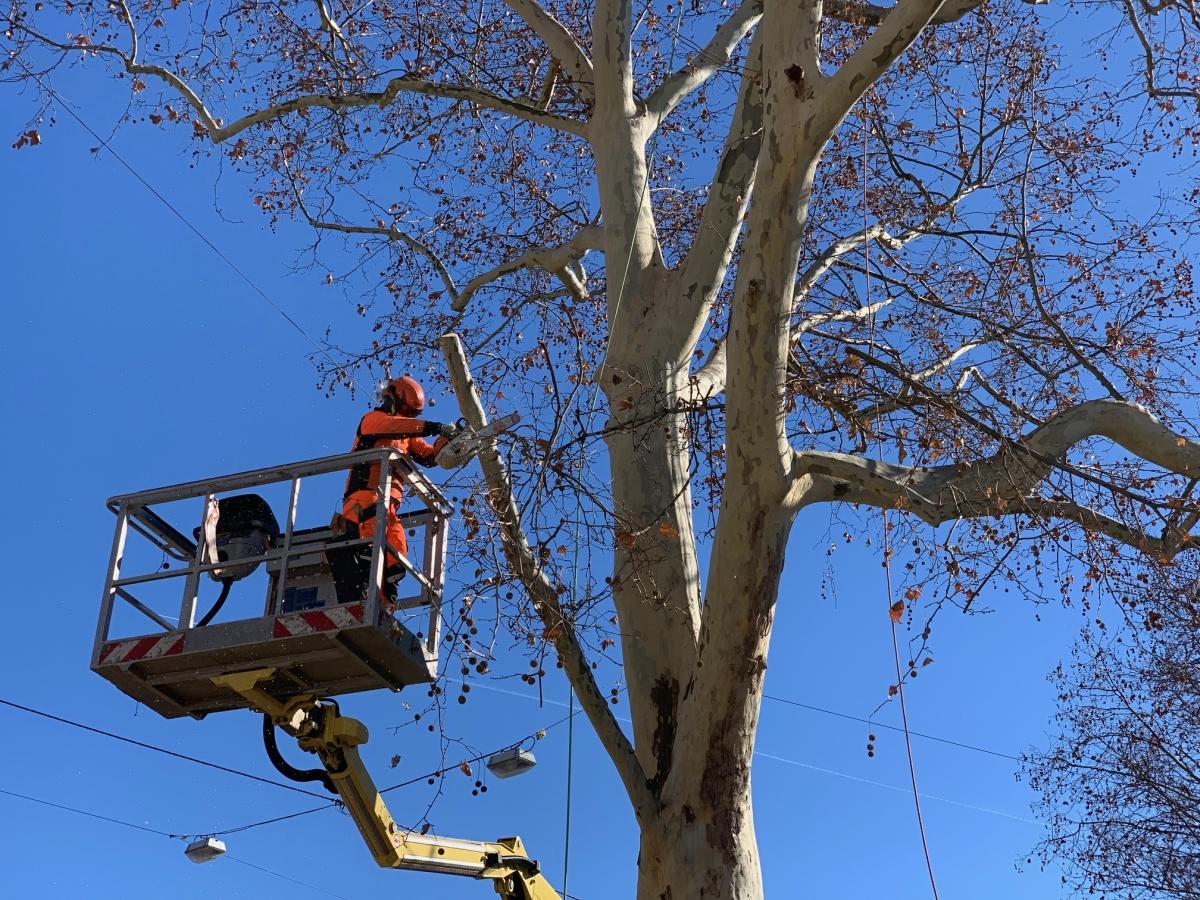 Baumpflege mit Hebebühne
