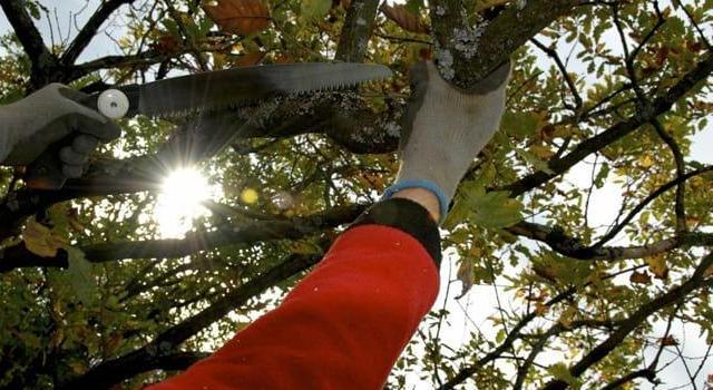 Bühler Gartenbau gartengestaltung baumpflege albrecht bühler baum und garten