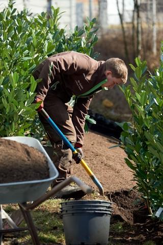 Pflanzarbeiten mit Substrat