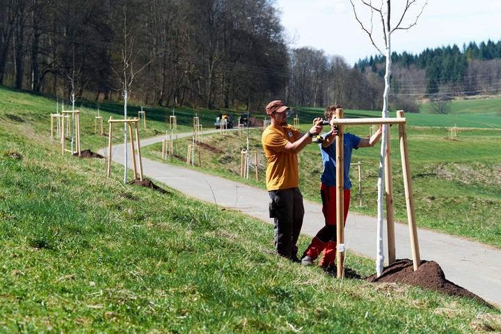 Baumpflanzung die Baumanbindung sogrt für Stabilität