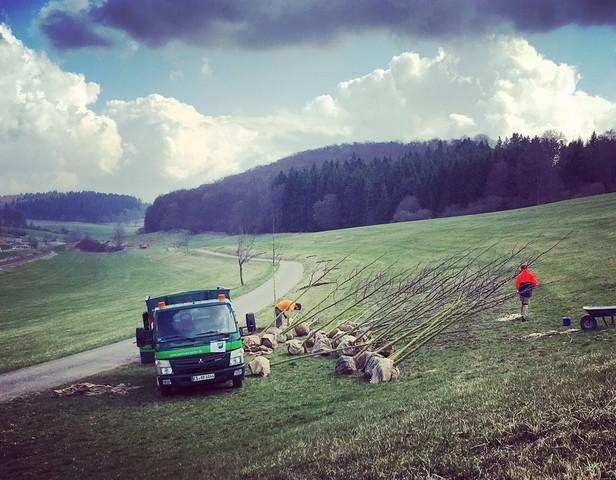 100 Linden für die Lions Allee in Gomadingen Offenhausen