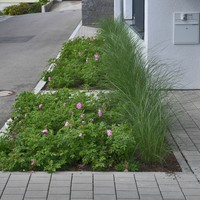 Buehler gartengestaltung pflanzen 2