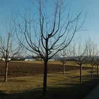 W Obstbaumschnitt3