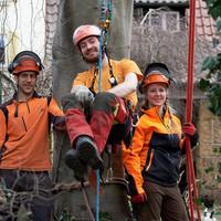 Baumpflegemitarbeiter im Einsatz