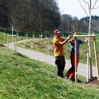 Baumpflanzung Lindenallee 4