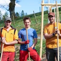 Baumpflanzung Lindenallee 5