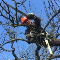Baumpflege Obstbaumschnitt