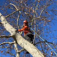 Baumpflege mit Seil Klettertechnik 2